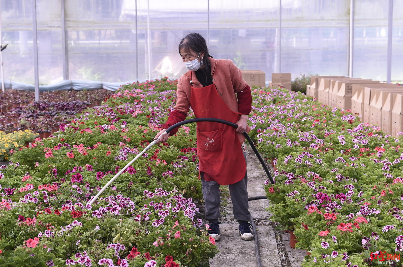 """变身""""李佳琦"""",线上直播带货!花式卖花带火温江近30万滞销花卉"""