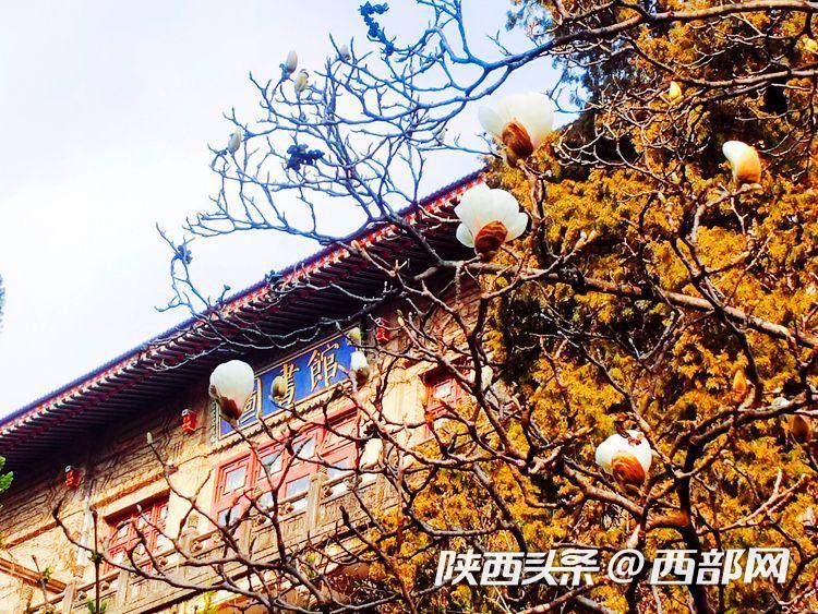 春天里的陕西丨春到陕西师范大学:春色尽满园