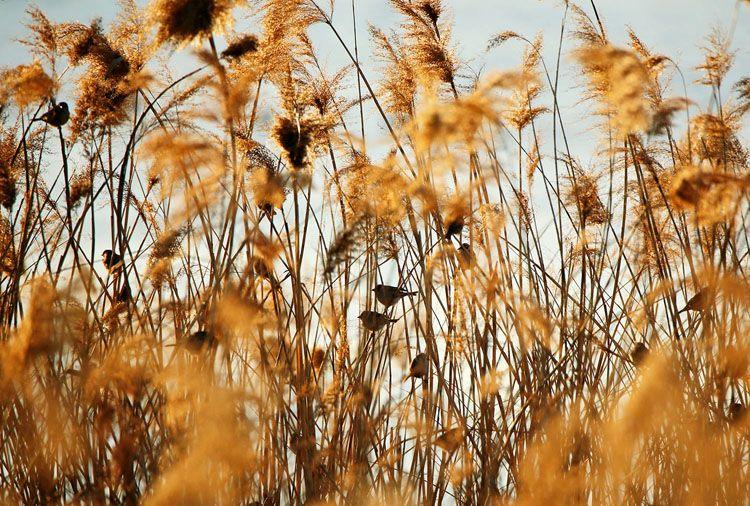 赏春|沙河水库落日观鸟图片