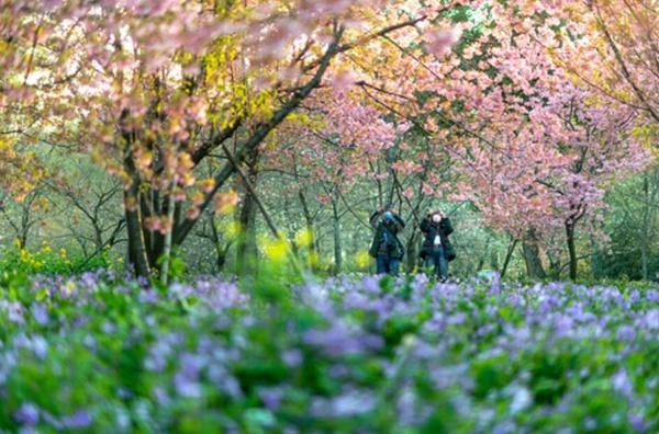 在这个春天里……图片
