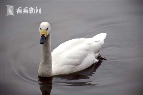 http://www.chnbk.com/dushuxuexi/11619.html