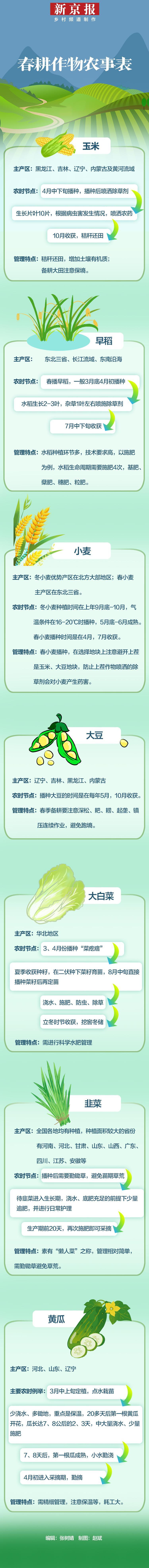 玉米早稻小麦 图解春耕作物的农时农事图片