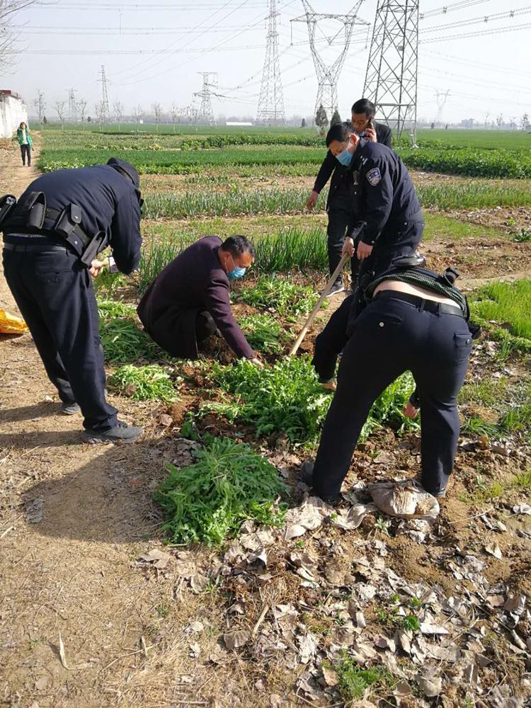 禹州两村民种罂粟被刑拘 警方:所种罂粟已全部铲除图片