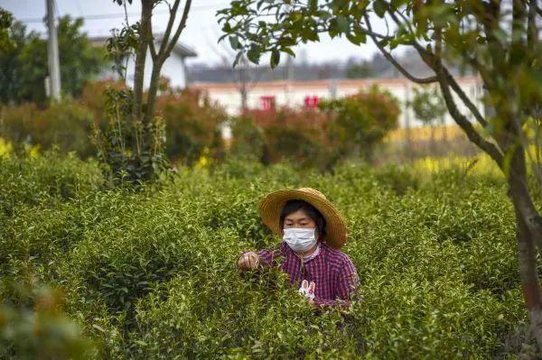 """外媒:中国""""最坏的情况似乎已经过去""""图片"""