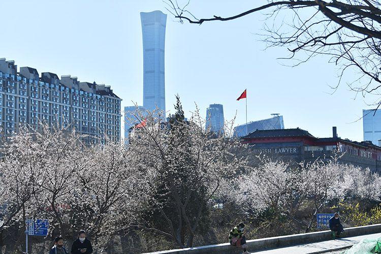 赏春 | 东四环花海争艳 扮靓二道沟河畔图片