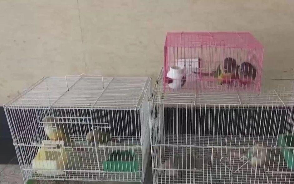 男子藏身昌平一小区出售野生鹦鹉,买卖双方均被刑事拘留图片