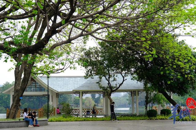 周末去哪儿玩?广州天河这些公园开放啦!