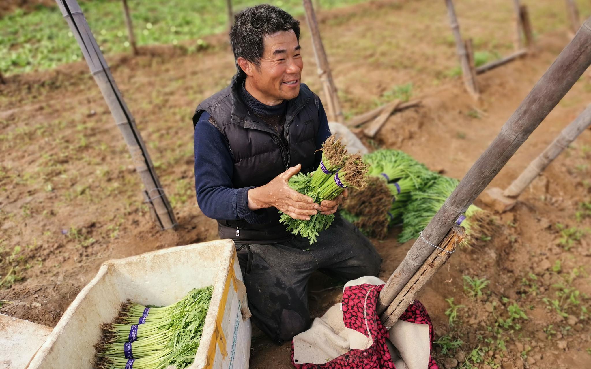 安徽农户京郊租地种菜,最担心的是买种子图片