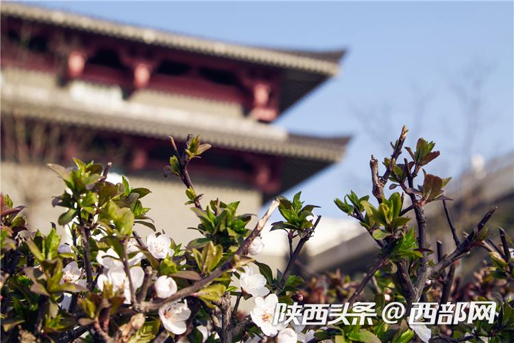 春天里的陕西 西安建筑科技大学:繁花满园传春信