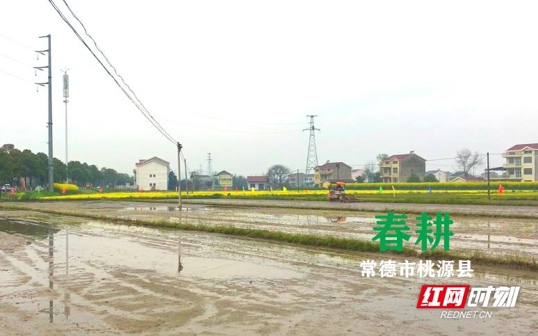 护航春耕丨桃源县:出台硬核措施 助力粮食增产量