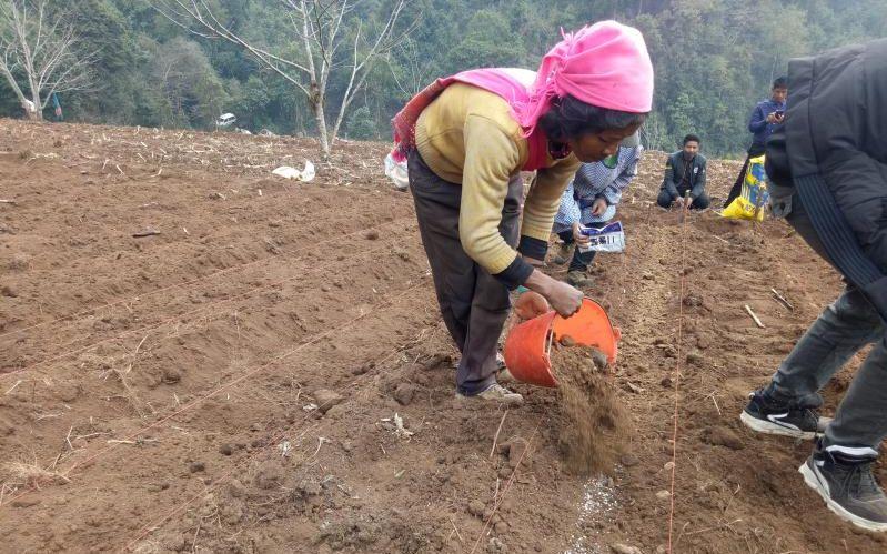 云南这4个村的魔芋种植统一运营 每亩收益超万元图片