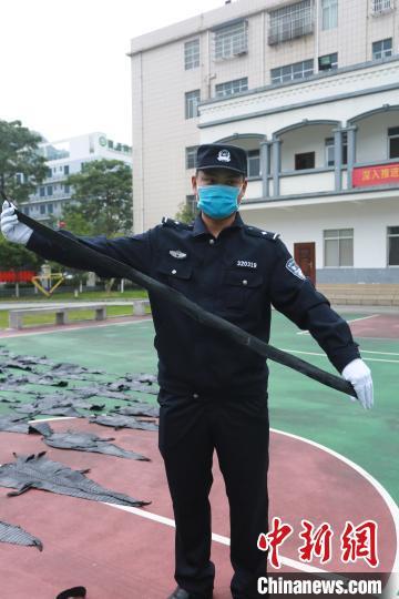 图为民警展示鳄鱼皮带制品。 游辉 摄