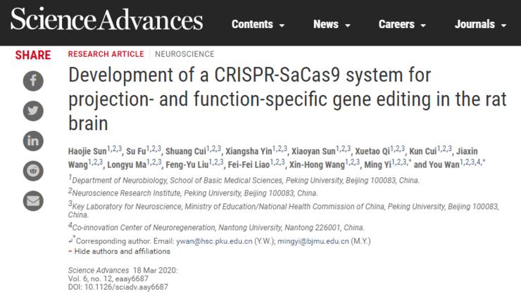 负面记忆可以精准删除?北大研究团队利用基因编辑做到了!