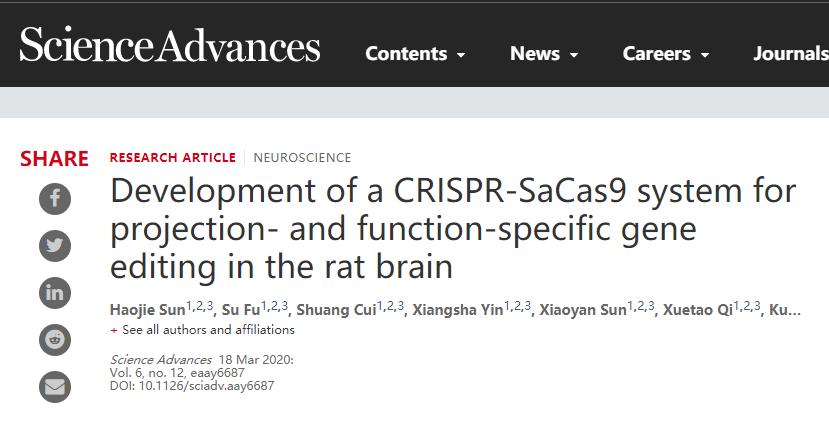 借助基因编辑技术,北大研究团队删除了大鼠的特定记忆