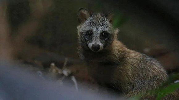 金山区成为上海第4个野生动物禁猎区