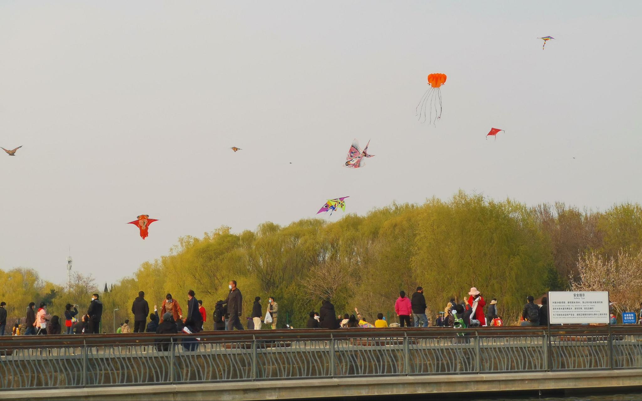 【蓝冠】开的季节奥林匹克蓝冠公园天空中筝图片
