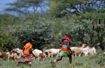 """国际述评:民以""""食""""为天 全球粮食安全临疫情大考"""