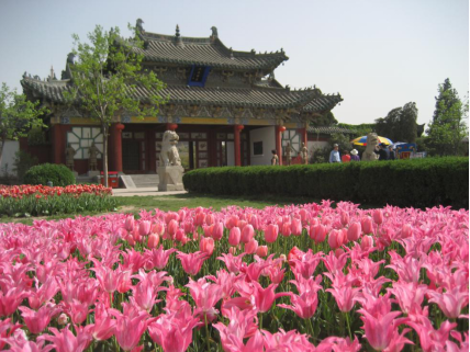 开封十一届国际郁金香艺术节将在天波杨府举办
