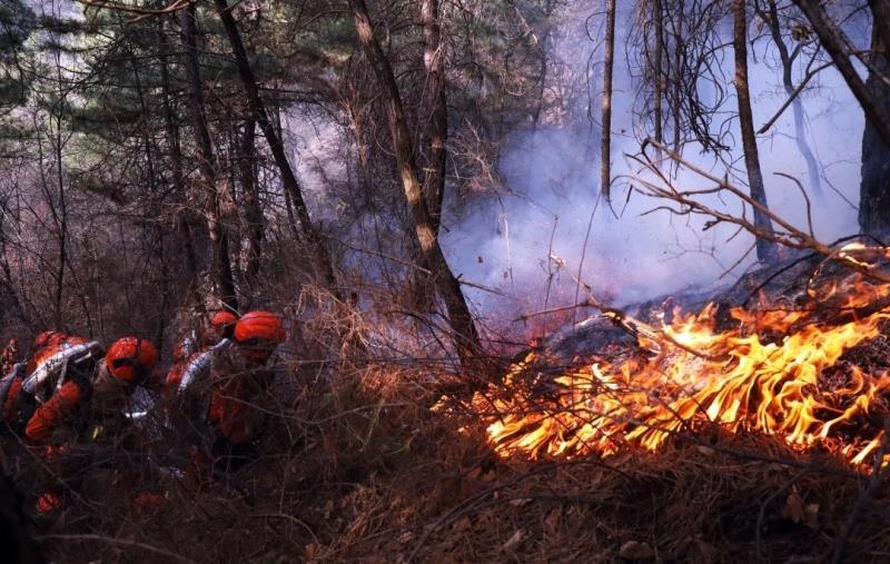 山西榆社及五台山森林火灾均系人为引发,嫌疑人已被刑拘图片