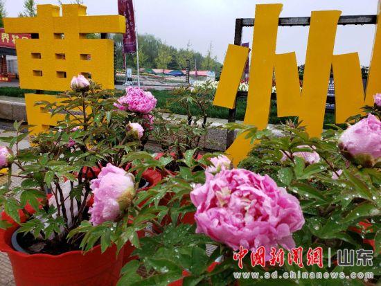 """第29届菏泽国际牡丹文化旅游节开幕 """"和牡丹有个约会"""""""