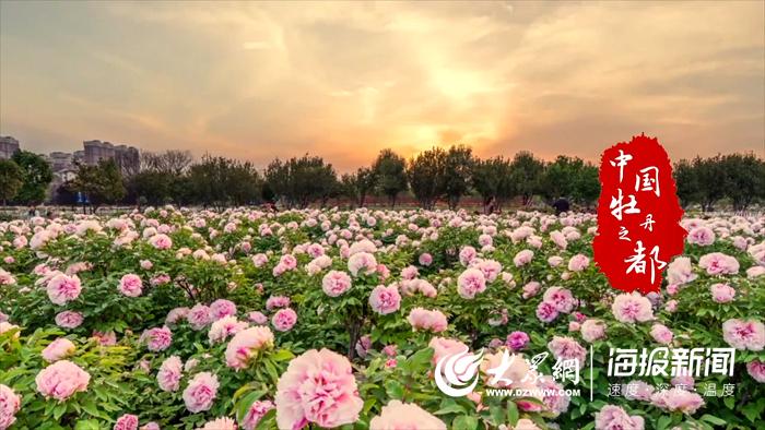 牡丹花已开我在菏泽等你 第29届菏泽国际牡丹文化旅游节开幕