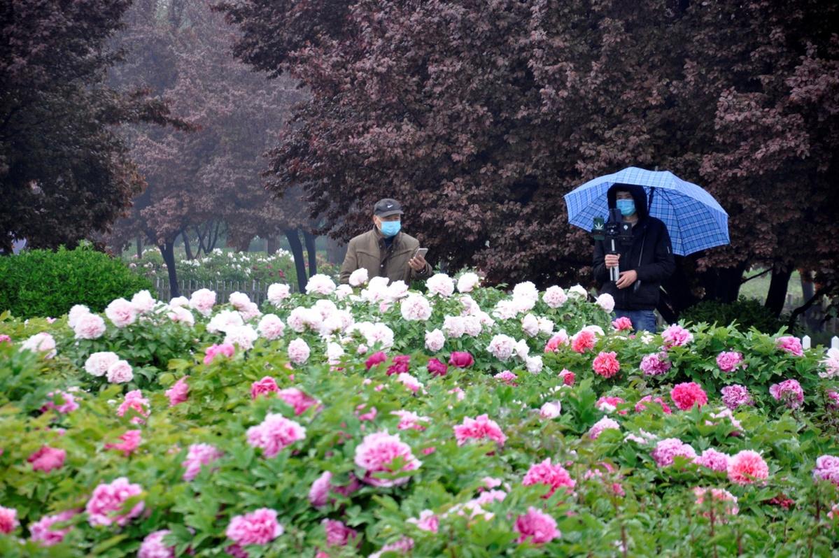 第29届菏泽国际牡丹文化旅游节线上开幕
