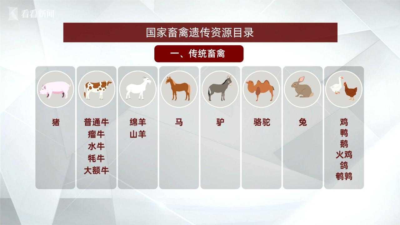 彩票代理动物白名单出炉彩票代理以后狗图片