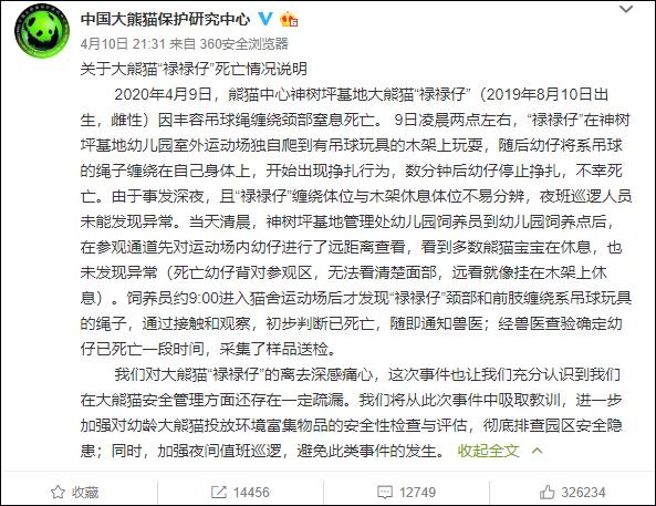 大熊猫幼仔绳子绕颈窒息死亡,网友凌晨看直播时发现异常图片