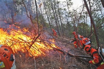 男孩熏松鼠引发木里火灾,法律责任如何承担?图片