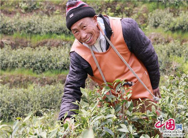 """贵州独山:将""""茶叶""""做成""""茶业"""""""
