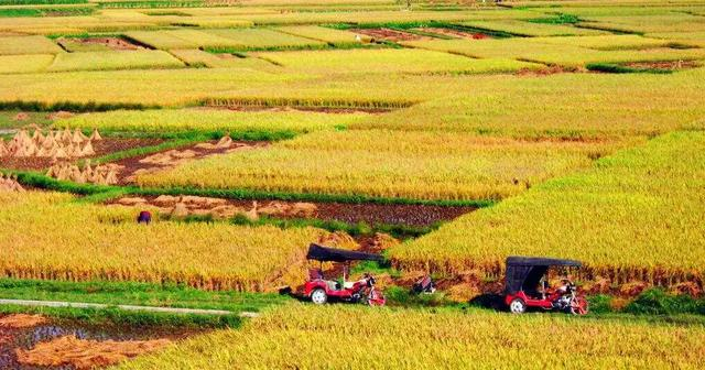 武汉市成品粮库存可以满足38天供应!三大商超承诺:不涨价、不断供