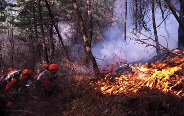山西榆社及五台山森林火灾系人为引发 嫌疑人被刑拘