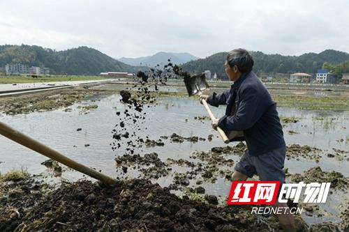 隆回:袁隆平超级稻基地备耕忙