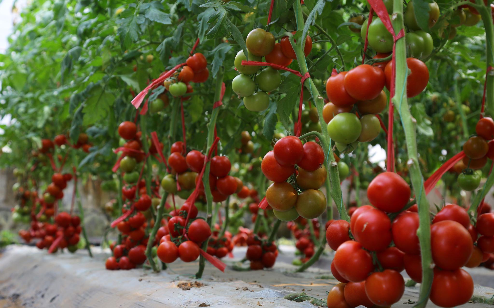 展区一角布置的种植蔬菜。受访者供图