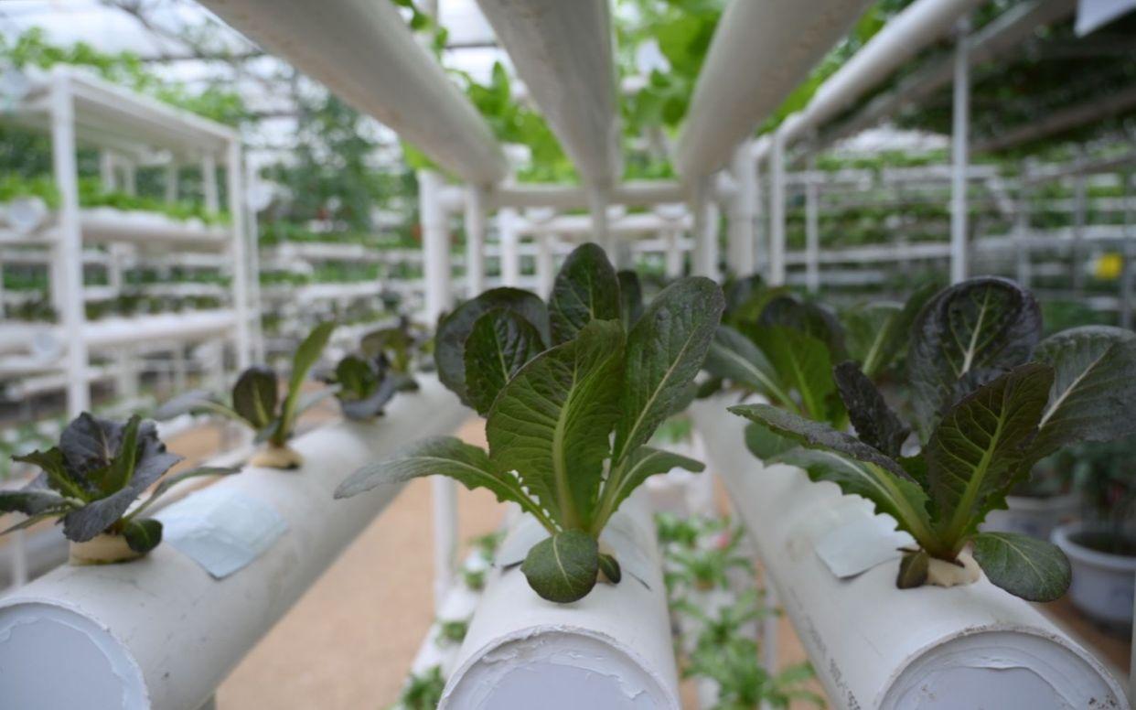 展馆内布置的设施蔬菜。受访者供图
