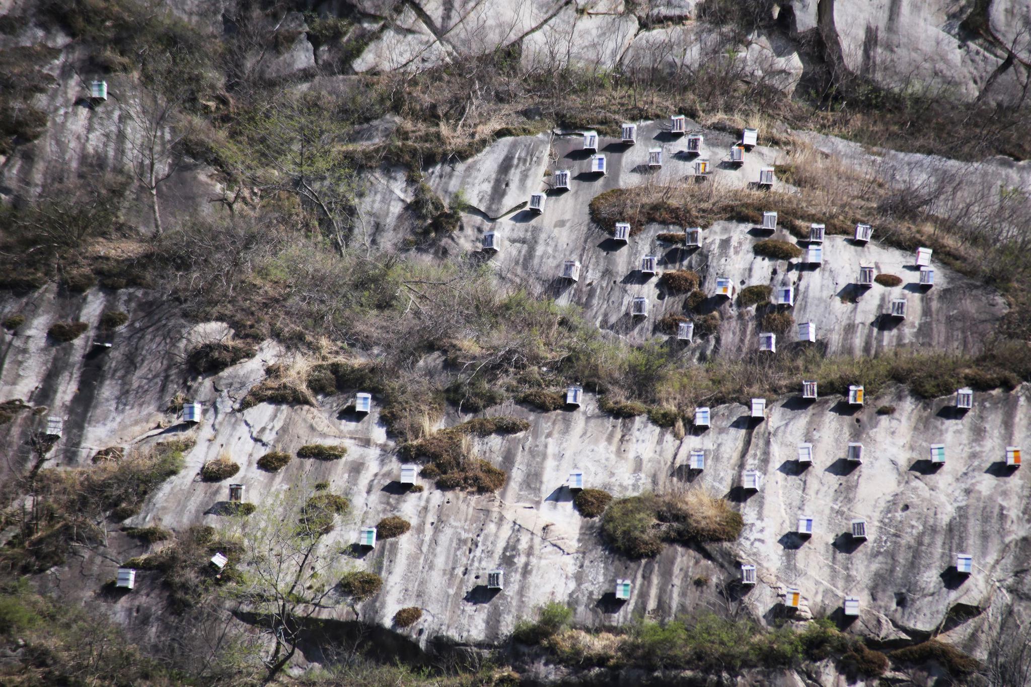 摩天平台:蜂谷景区游客可赏摩天平台崖壁图片