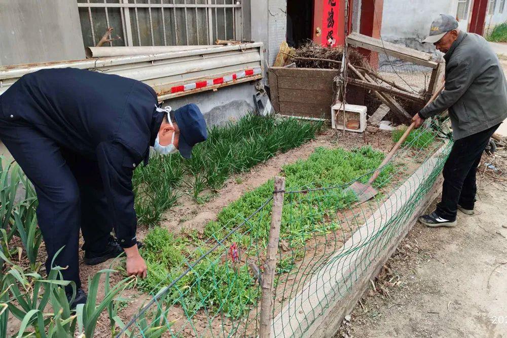 <strong>胶州人注意:这个植物不是菜,种植一株也违法</strong>