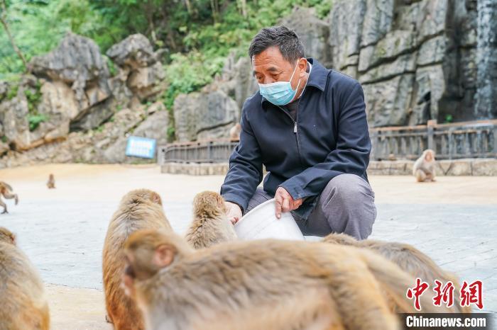 罗起跃给猕猴喂食。 陈冠言 摄