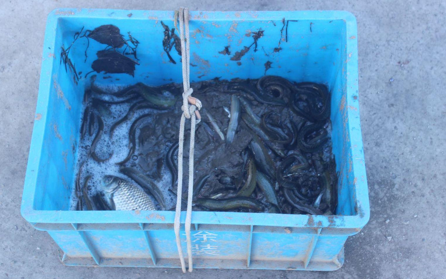男子潮白河电鱼被刑拘,警方去年破获非法捕捞案件36起图片