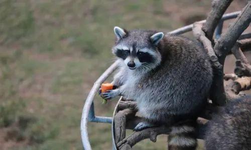 专家建言上海野生动物保护:取消大型商业综合体动物展示图片
