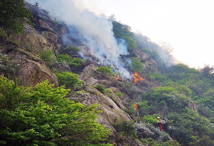 自然科学,组图直击|青岛小珠山救自然科学火一线图片