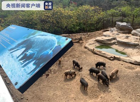 受山火影响 青岛小珠山山下动物园开挖隔离带做转移准备图片