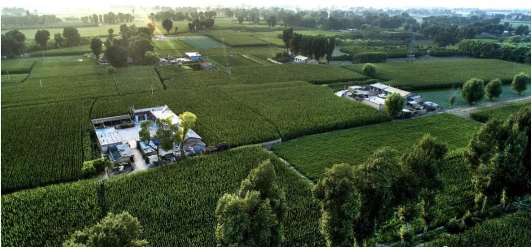 陕西榆林市靖边县东坑镇新建村绿色包围中的农家小院。图源:新华社