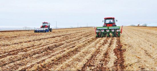 肇东124万亩免耕玉米开播