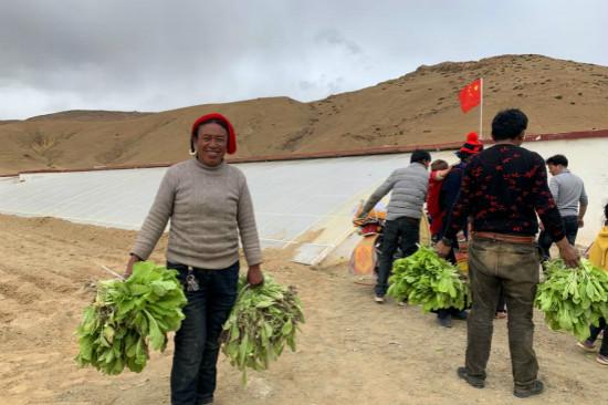 第一批蔬菜在萨哈县杰村成功采摘