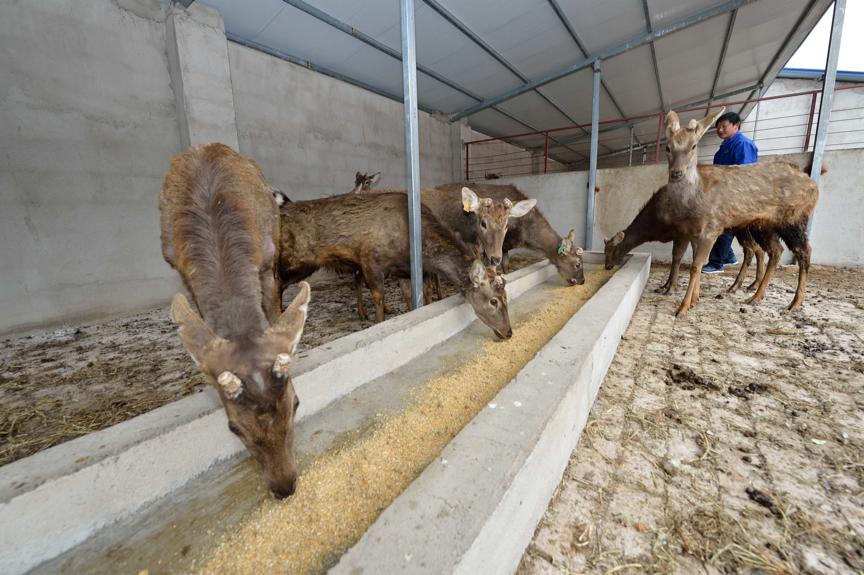 人工养殖的野生动物应纳入畜禽管理吗?图片