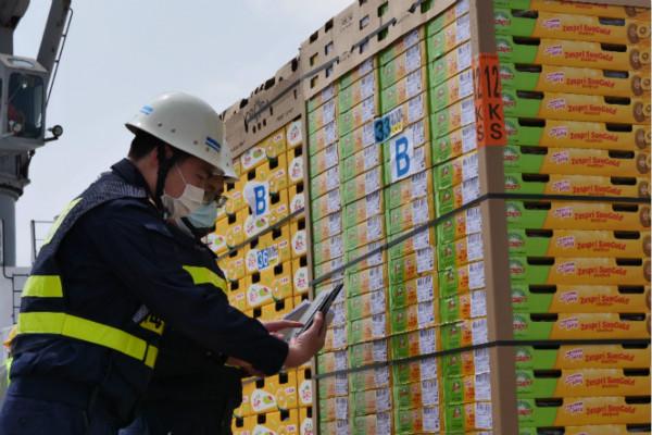 全国首艘当季新西兰猕猴桃货轮抵达上海 4500吨金果来了