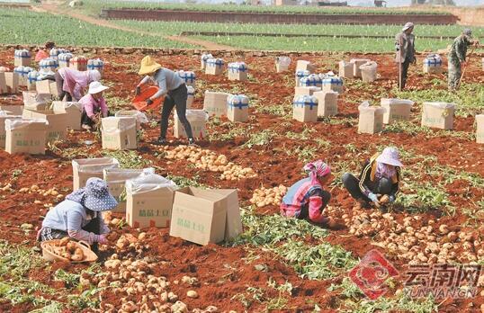 云南红河州推动农业绿色发展