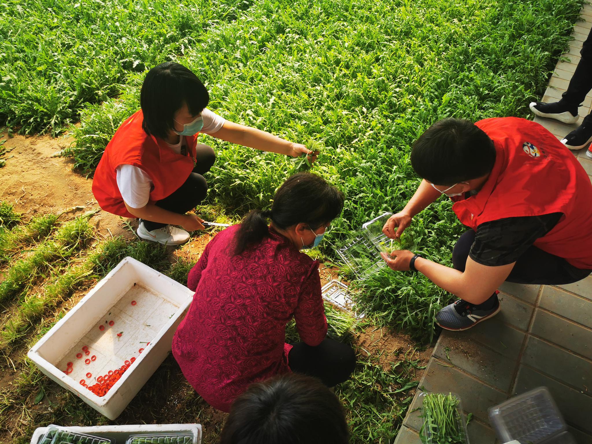【杏悦登录】农卖出滞销蔬菜40杏悦登录00余图片