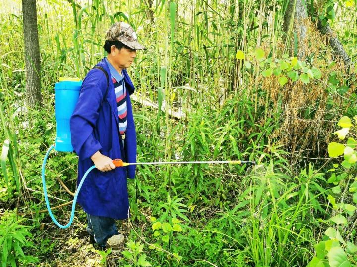 扬州喷农药围剿一枝黄花,市民采摘野菜时提防农药中毒
